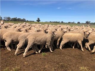 400 NSM Ewes